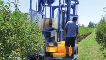 Ken Engle modifed a berry harvester to increase production in his high-density tart cherry system.  Photo Credit: Emily Pochubay
