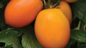 Harris Seeds 2016 Vegetable Variety Showcase