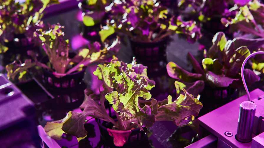 Growing crops in a climate controlled multi-layer environment with the LED lights achieves shorter growth cycles, higher water efficiency, flexible but guaranteed harvests and safe and healthy crops. Photo courtesy of Urban Crops.
