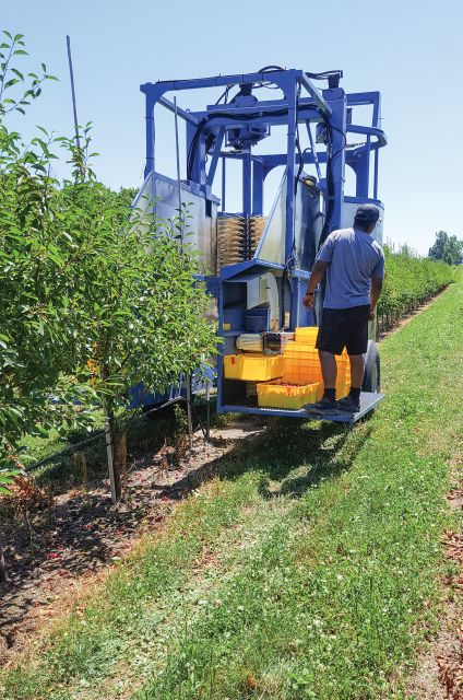 Ken Engle modifed a berry harvester to increase production in his high-density tart cherry system. (Photo Credit: Emily Pochubay)