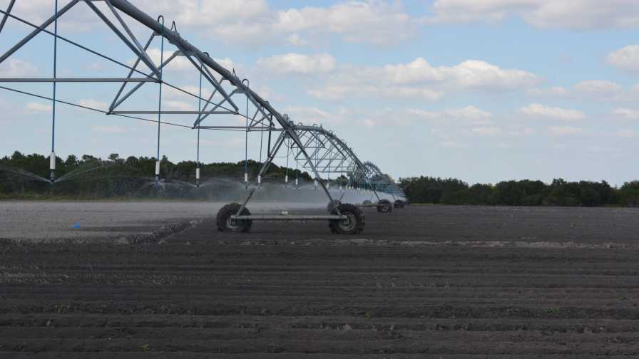 Low-volume overhead irrigation system at Jones Potato Farm