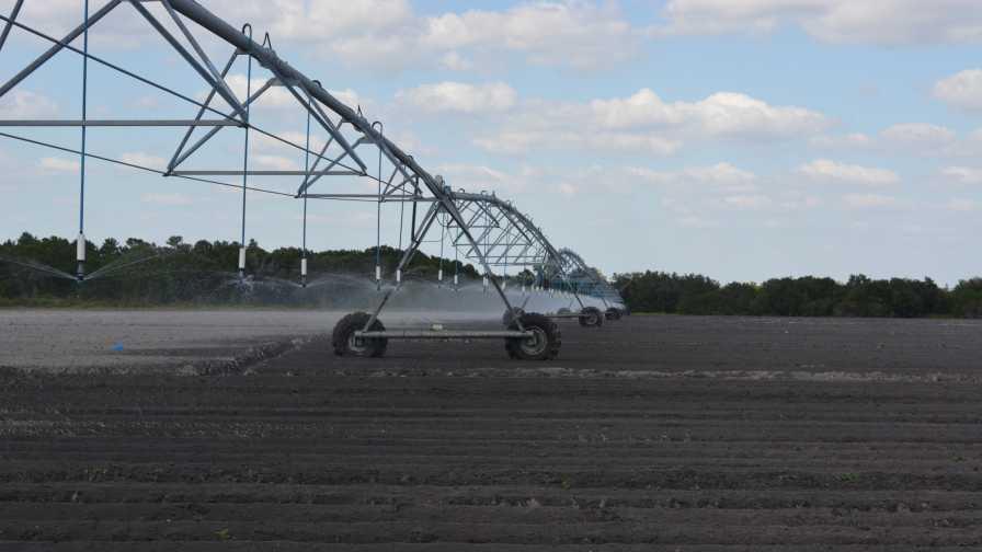 Low-volume overhead irrigation system at Jones Potato Farm