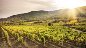 Control vineyard weeds early this season