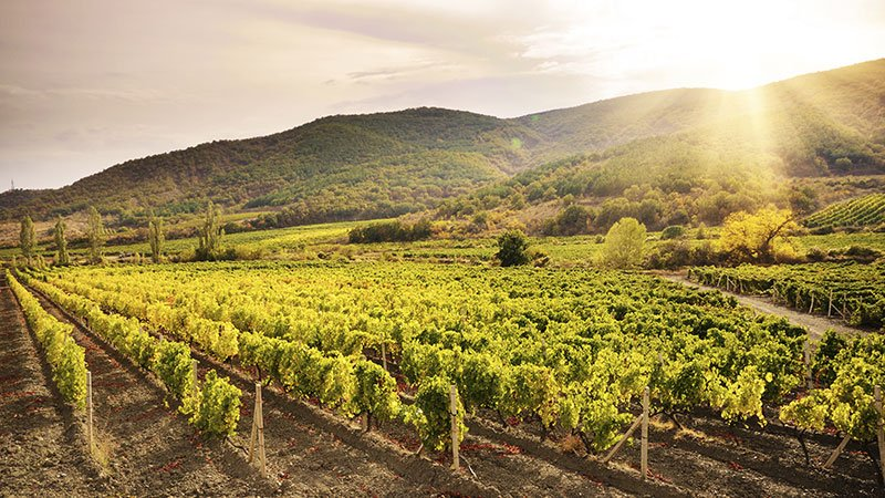 ca_grape_fallvines_gettyimages-488654691