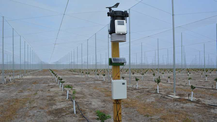 Weather station in citrus under protective screening
