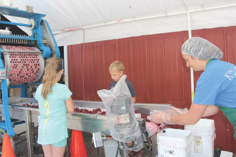 Juliette King, right, assists some young helpers process sweet cherries that pass through the orchard's pitter. (Photo credit: Christina Herrick)