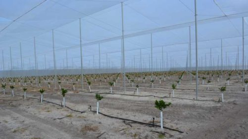 Scientists on Inside Track to Shut Out Citrus Greening