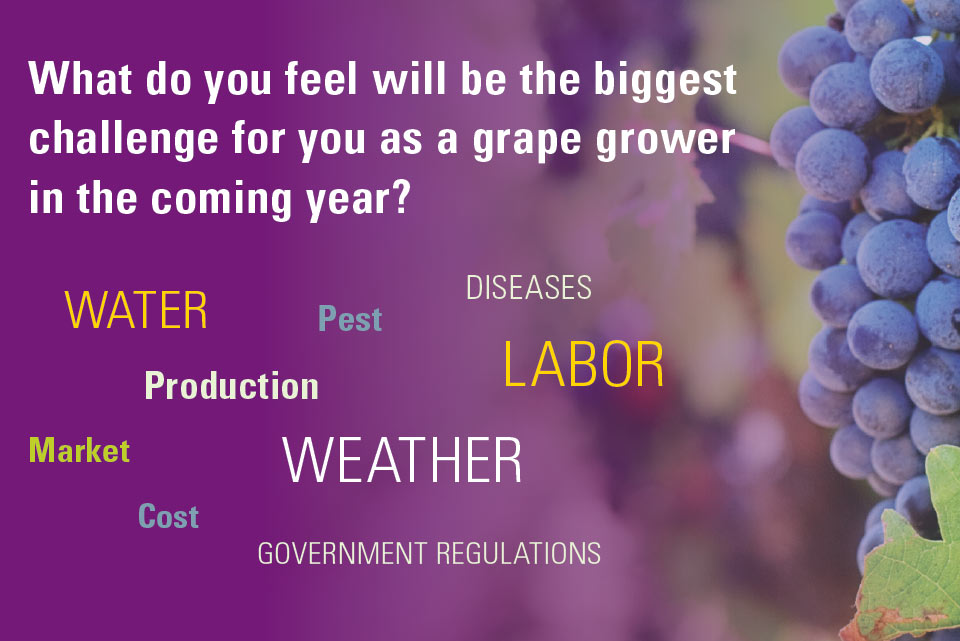 biggest-challenge-grapes-2017-soi