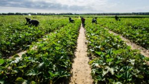 mirgant-workers-in-a-squash-field-_-source-usda