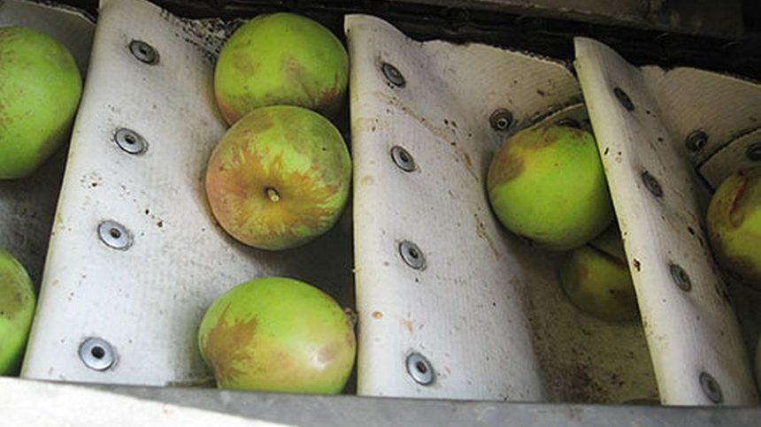 Washington State University Researchers Develop Hard Cider Apple Storage, Harvesting Recommendations
