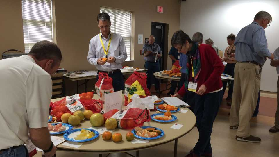 Citrus variety display survey at 2017 Florida Citrus Show