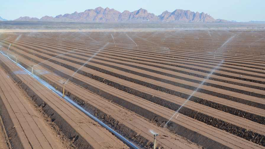 Sprinkler irrigation is used on a baby lettuce field in California's Imperial Valley. Photo credit: David Still