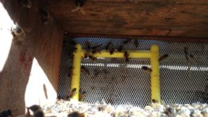 New Product Helps Bees Brush Off Mites