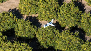 Using Drones To Scout Almonds From Above