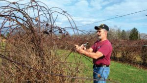 Pruning Pointers for Dormant Care of Berries