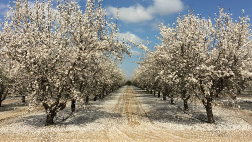 Next Generation of Leaders Gets Yearlong Almond Immersion