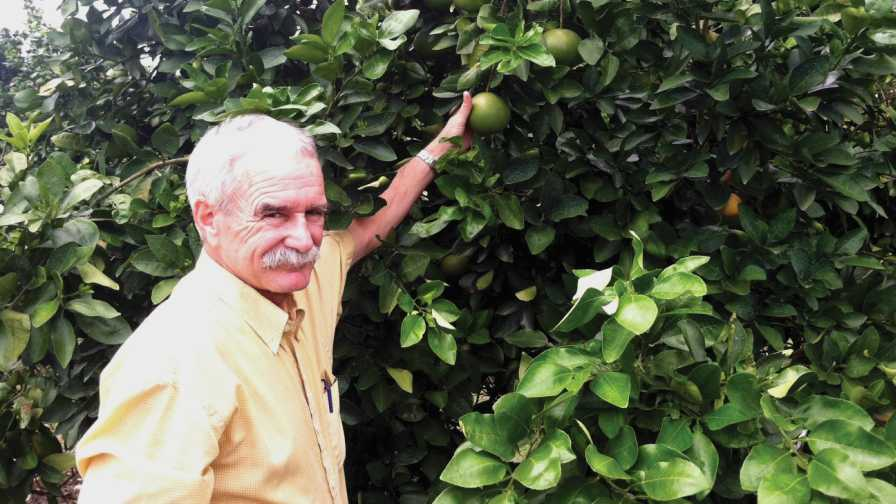 UF/IFAS' Jim Graham next to a Zinkicide-treated grapefruit tree
