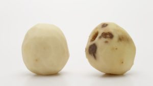 3 GMO, Late-Blight-Resistant Potato Varieties Get EPA Approval