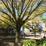 Campus of Massey University in New Zealand