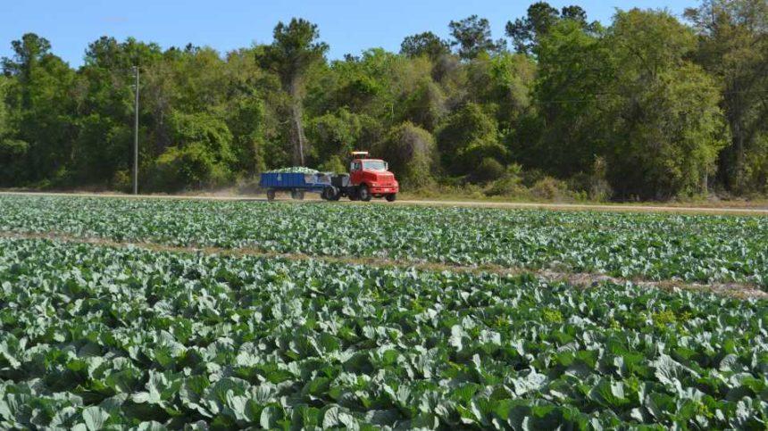 Florida Growers Seeking Inspiration Need Not Look Far
