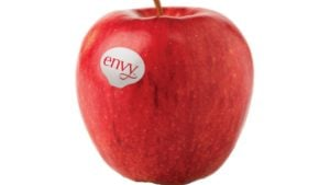 'Envy' Top Variety in USApple Tournament
