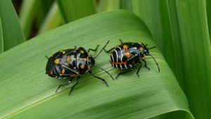 A Guide to Experts Tips on Vegetable Insect Pests