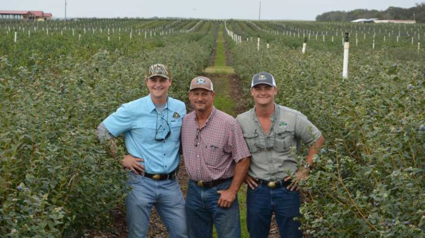 Florida Farming Family Staying on Top of the Blueberry Game