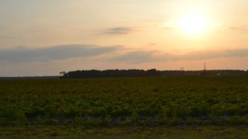Sunset on Florida potato field day