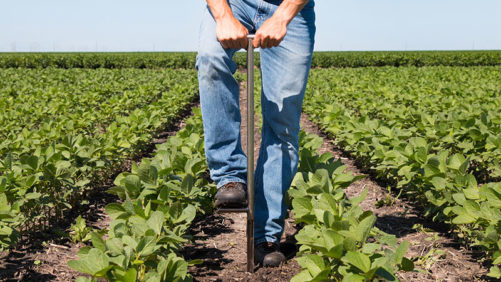Small, but Mighty – Micronutrients Needed for Macro Yields