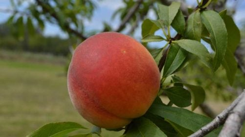 Give Us Your Take on Fruit Industry Issues