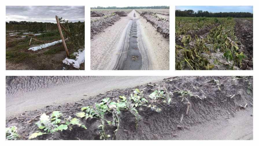 Photo collage of Hurricane Matthew farm damage in Northeast Florida