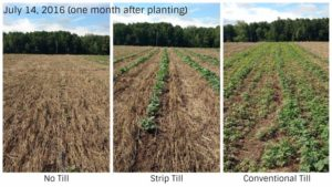 Considering Cover Crops? Find Out Which Method Works Best