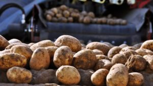 A Study on Best Cleaning Practices for Common Vegetable Equipment Under Way