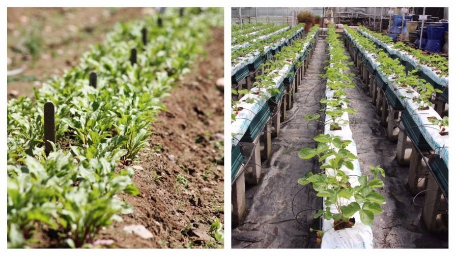 Smackdown: Hydroponic vs  Soil-Based Organic Growing