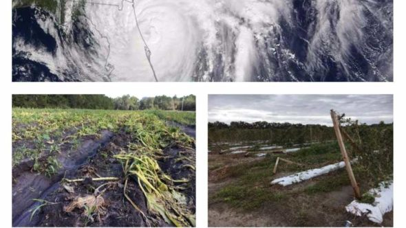 Hurricane season photo collage