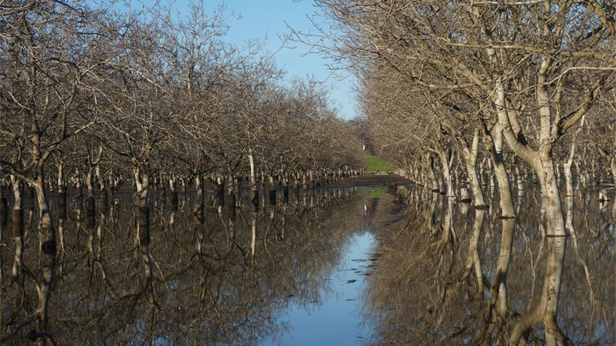 Have flooded orchards keep an eye out for damage growing produce - Spring trimming orchard trees healthy ...