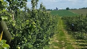 Michigan's a Hit with Tree Fruit Growers