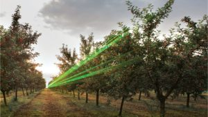 High-Tech Solution for Bird Control in Your Orchard