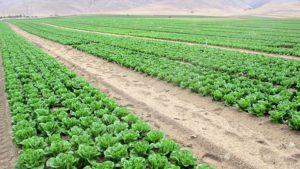 4 Challenges Large Operations Face in Organic Vegetable Production