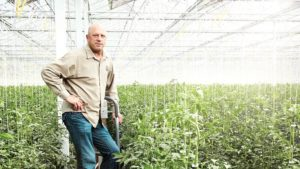 Houweling's Tomatoes Grows Produce with Mastery Under Glass
