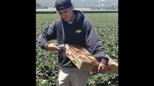 Traceability Products to Help You Track Produce