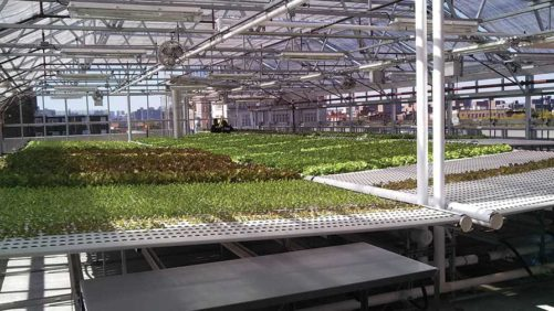 Greenhouse Vegetable Production Systems for Every Grower
