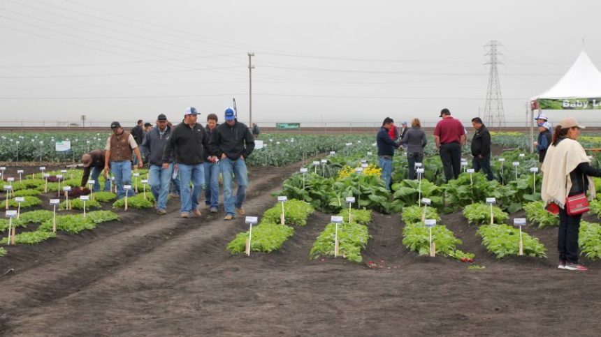 Want to Tour Vegetable Field Trials in California? Here's What You Need to Know