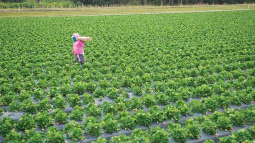 Specialty Crop Concern Feeds Need to Negotiate NAFTA Now