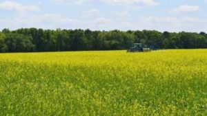 Research on Jet Fuel Cover Crop Ready for Takeoff