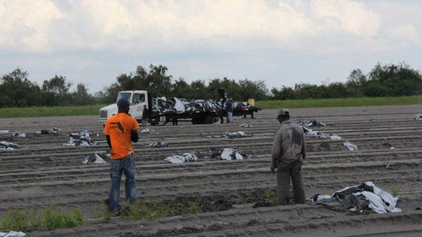 Ways Florida Growers Can Keep Ahead of Pests Post-Irma