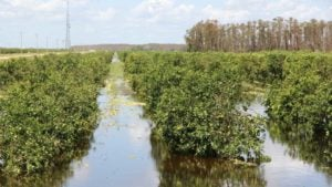 New Tax Law Spells Sweet Relief for Citrus Growers
