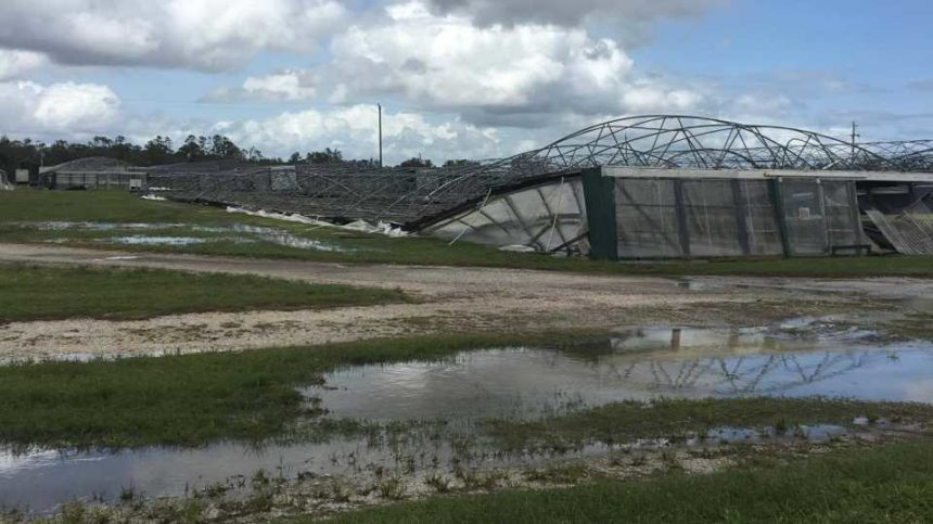 Hurricane Irma Toll on Florida Farming in the Billions