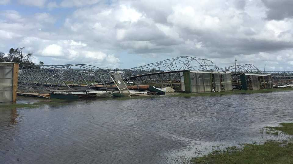 Widespread damage from Irma at C&B Farms