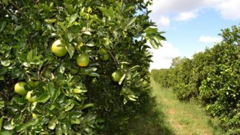 Biocontrols East 2017 tour stop in citrus country